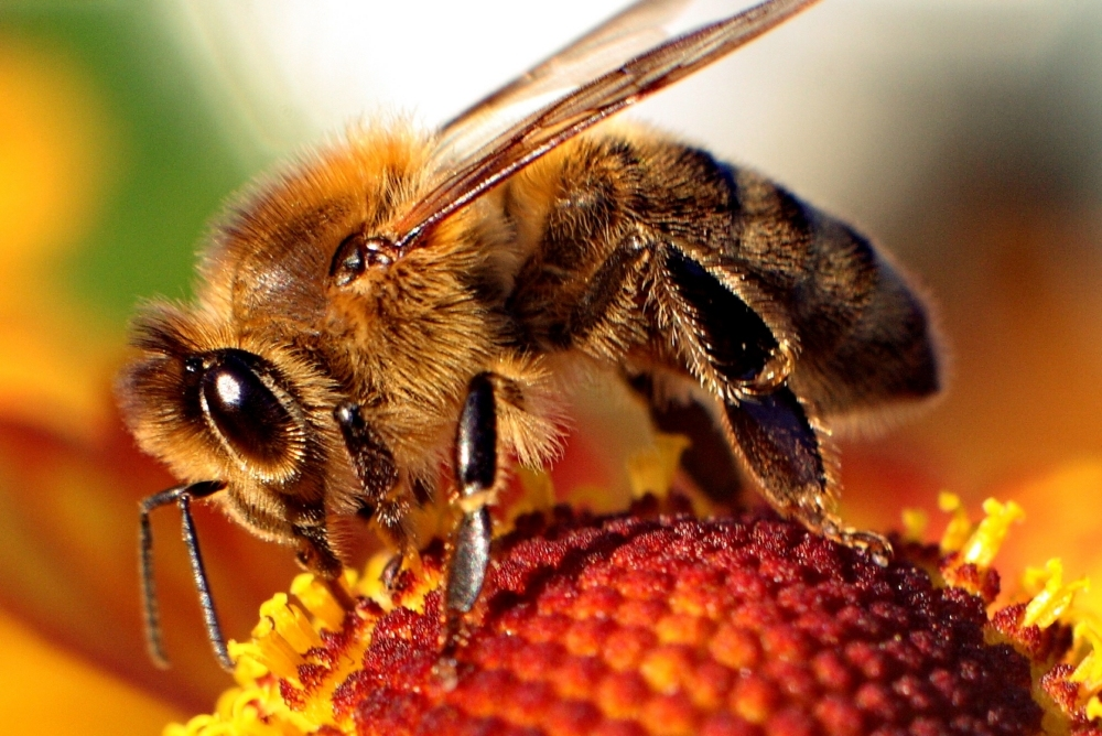 Computer model of how bees view the world could be a breakthrough for robotics