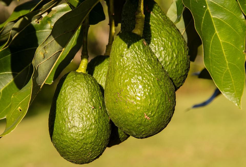 connected avocado