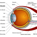 medical robotics human-eye-diagram