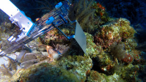 Lionfish interacting with RISE prototype paddle 1 Image courtesy of  Ocean Support Foundation