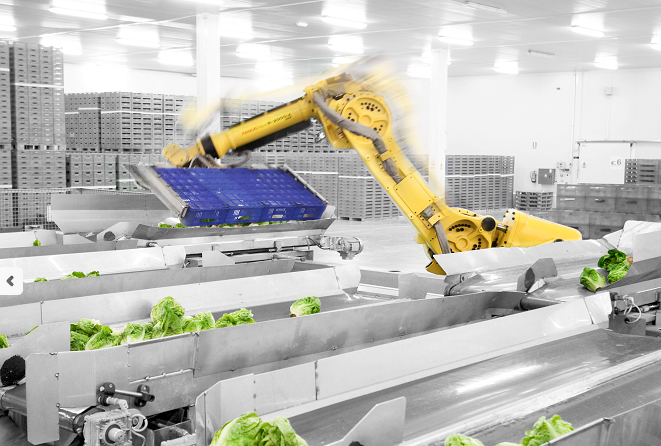 Spanish farm produce supplier reduces human workers from 500 to 100 using robots