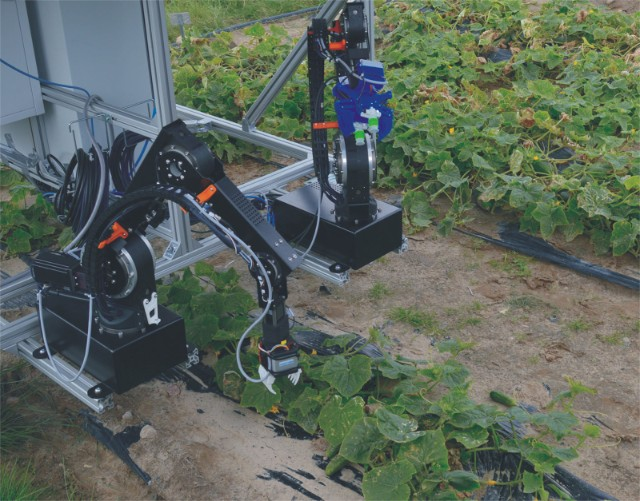 fraunhofer cucumber picking robot