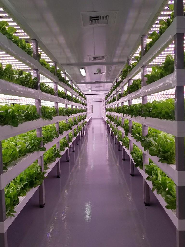 Top 25 vertical farming companies